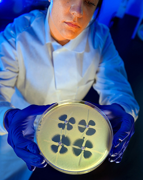"""A CDC microbiologist holds up aplate used to identify resistance in bacteria known as Enterobacteriaceae. Bacteria that are resistant to carbapenems, considered """"last resort"""" antibiotics, produce adistinctive clover-leaf shape on the plate. Credit: CDC"""