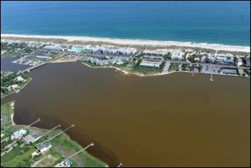 Brown tide has decimated eastern Long Island's shellfishing industry. Credit: Chris Gobler