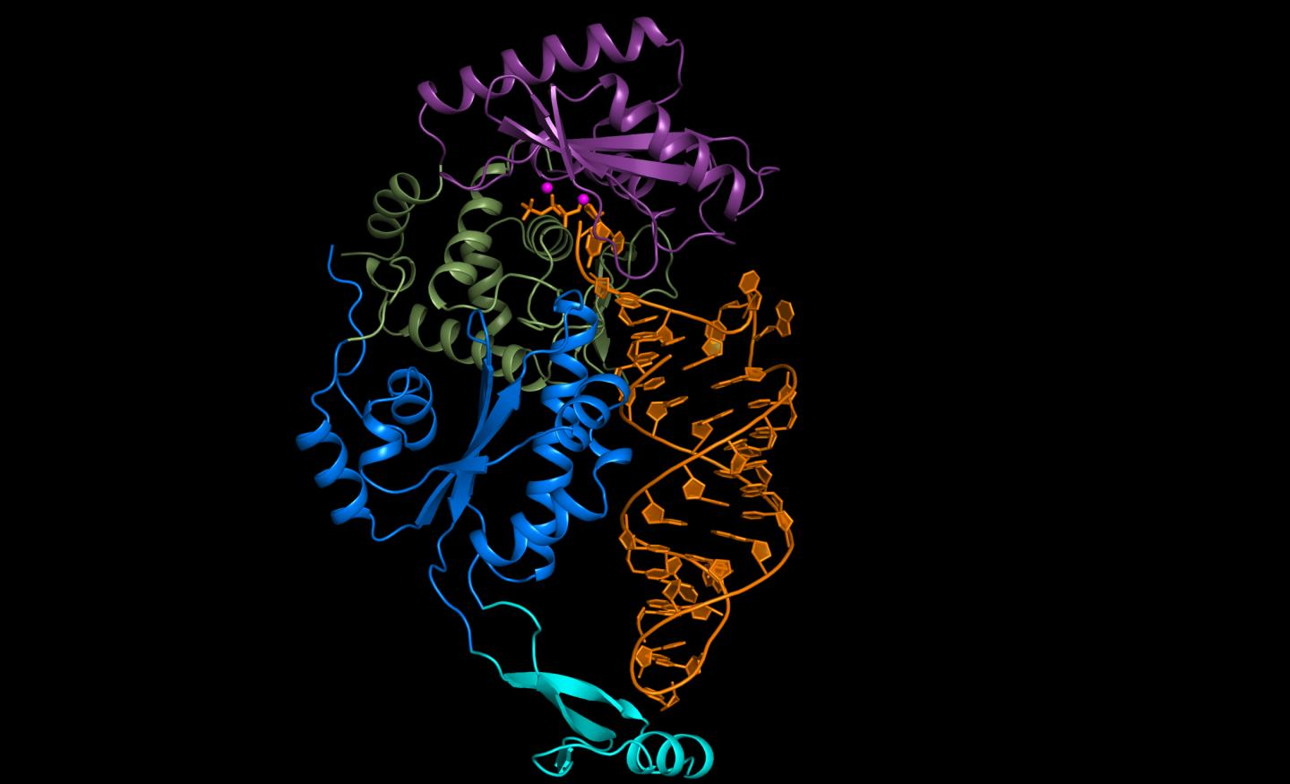 Researchers at Cold Spring Harbor Laboratory have uncovered a remarkable, new proofreading mechanism. In general, enzymatic machines are responsible for weeding out and correcting errors. But a team of scientists has found that the CCA-adding enzyme (shown here in blue, green, and pink) doesn't edit at all. Instead, the RNA (in orange) has a built-in mechanism that allows it to proofread itself. Credit: L. Joshua-Tor, Cold Spring Harbor Laboratory
