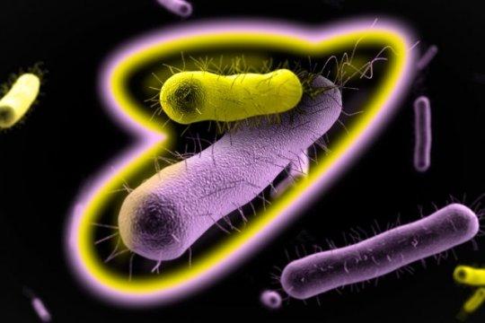 Mutualismus je vzájemně prospěšná spolupráce různých druhů bakterií, které tím mohou získat např. lepší odolnost proti antibiotikům anepříznivým vlivům prostředí. Credit: Jose-Luis Olivares/MIT