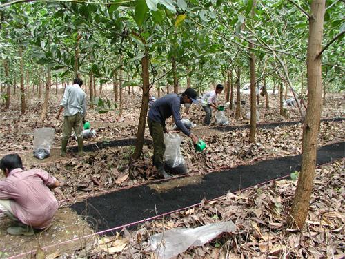 Aplikace biouhlu vIndonésii na jižní Sumatře. Kredit: Yasuyuki Okimori