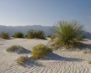 písečná poušť