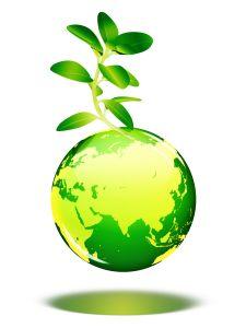 zelená rostlinka
